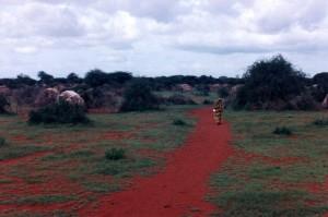kenyan-somalis-human-rights-discrimination-refugees-westgate-mall-722x481