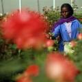 ethiopian_women