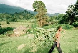 Tanzania farming